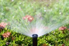 Het hoofd dat van de sproeier de struik water geeft Stock Fotografie