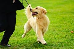 Het hoofd spelen met zijn hond Royalty-vrije Stock Afbeelding