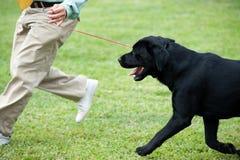 Het hoofd spelen met zijn hond Royalty-vrije Stock Foto's