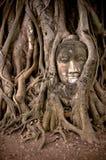 Het hoofd van Boedha in banyan boomwortels Stock Afbeeldingen