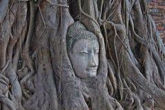 Het hoofd van Boedha in boom Royalty-vrije Stock Foto's