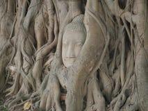 Het hoofd van Boedha in boom Stock Afbeeldingen
