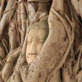 Het hoofd van Boedha in boom royalty-vrije stock fotografie