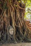 Het Hoofd van Boedha in Boomwortels, Wat Mahathat, Ayutthaya Stock Fotografie