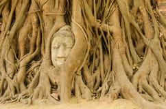 Het hoofd van Boedha in de boom. Royalty-vrije Stock Afbeeldingen