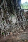 Het hoofd van Boedha in de boom, Ayutthaya Thailand royalty-vrije stock afbeeldingen