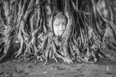 Het hoofd van Boedha in de boom in zwart-witte Ayutthaya Thailand royalty-vrije stock afbeeldingen