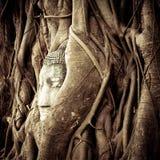 Het Hoofd van Boedha in de boomwortels. Ayutthaya, Thailand royalty-vrije stock afbeeldingen