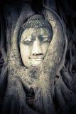 Het Hoofd van Boedha in de boomwortels die wordt verborgen royalty-vrije stock foto