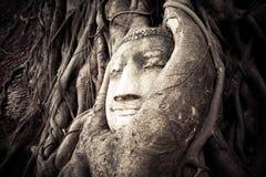 Het Hoofd van Boedha in de boomwortels die wordt verborgen stock afbeelding
