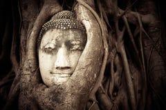 Het Hoofd van Boedha in de boomwortels die wordt verborgen stock fotografie