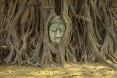 Het hoofd van Boedha in de boomwortels in Wat Maha That Royalty-vrije Stock Foto's