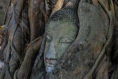 Het hoofd van Boedha door een boom in Ayuthaya Thaila wordt overwoekerd die Royalty-vrije Stock Foto's