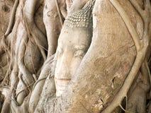 Het hoofd van Boedha door vijgeboom in Wat Mahatat, Ayutthaya wordt overwoekerd die hist Royalty-vrije Stock Fotografie