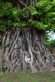 Het hoofd van Boedha met boomwortels wordt ineengestrengeld, Wat Mahathat, Ayutthaya die prov stock foto's