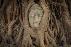 Het hoofd van Boedha s in boomwortel Royalty-vrije Stock Afbeeldingen
