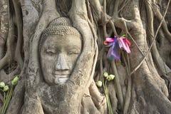 Het hoofd van Boedha \ 's dat in bomen, Ayuthaya wordt verward Stock Fotografie