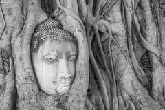 Het hoofd van Boedha 's in de boomwortels Stock Foto