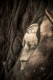 Het hoofd van Boedha s in een boom stock foto