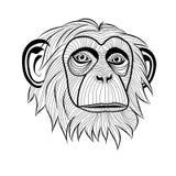 Het hoofd van de aapchimpansee Stock Fotografie
