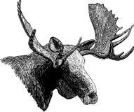 Het Hoofd van de Amerikaanse elanden van de houtdruk stock illustratie