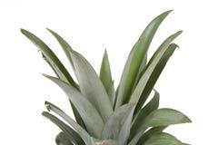Het hoofd van de ananas Stock Afbeeldingen