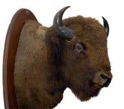 Het Hoofd van de bizon Royalty-vrije Stock Afbeeldingen