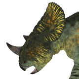 Het Hoofd van de Brachyceratopsdinosaurus Stock Afbeelding