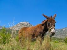 Het hoofd van de ezel Royalty-vrije Stock Foto's