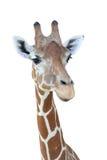 Het hoofd van de giraf stock foto