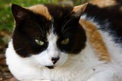Het hoofd van de kat Royalty-vrije Stock Afbeeldingen