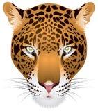 Het hoofd van de luipaard binnen   royalty-vrije illustratie