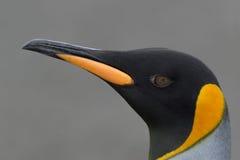 Het hoofd van de pinguïn Stock Foto