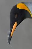 Het hoofd van de pinguïn Stock Foto's