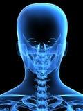 Het hoofd van de röntgenstraal van de rug Stock Afbeeldingen