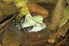 Het hoofd van de slang Stock Foto