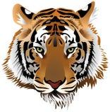 Het hoofd van de tijger Stock Afbeeldingen