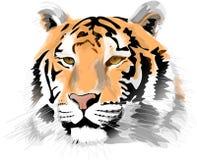 Het hoofd van de tijger Stock Afbeelding