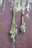 Het hoofd van de twee bospapaver met zaden op oude houten muur Stock Fotografie