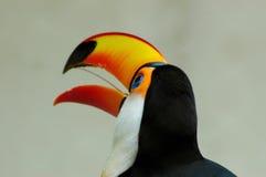 Het hoofd van de vogel royalty-vrije stock foto