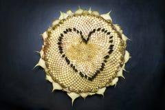 Het hoofd van de zonnebloem De vorm van het hart Royalty-vrije Stock Afbeeldingen