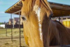 Het hoofd van een mooi rood paard royalty-vrije stock fotografie
