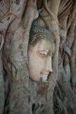 Het hoofd van een oud beeldhouwwerk van Boedha dat in boomwortels groeide Een blik in een profiel thailand royalty-vrije stock afbeeldingen