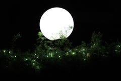 Het hoofd van een witte bol die binnen - tussen de groene bladeren in de tuin te voorschijn komen Stock Foto's