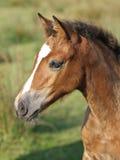 Het hoofd van het paard Stock Afbeeldingen