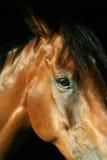 Het hoofd van het paard Royalty-vrije Stock Afbeeldingen