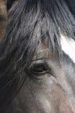 Het hoofd van het paard royalty-vrije stock foto's