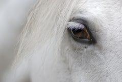 Het hoofd van het paard royalty-vrije stock foto