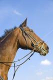 Het hoofd van het paard op blauw Royalty-vrije Stock Foto