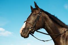 Het hoofd van het paard over blauwe hemelachtergrond Royalty-vrije Stock Afbeeldingen